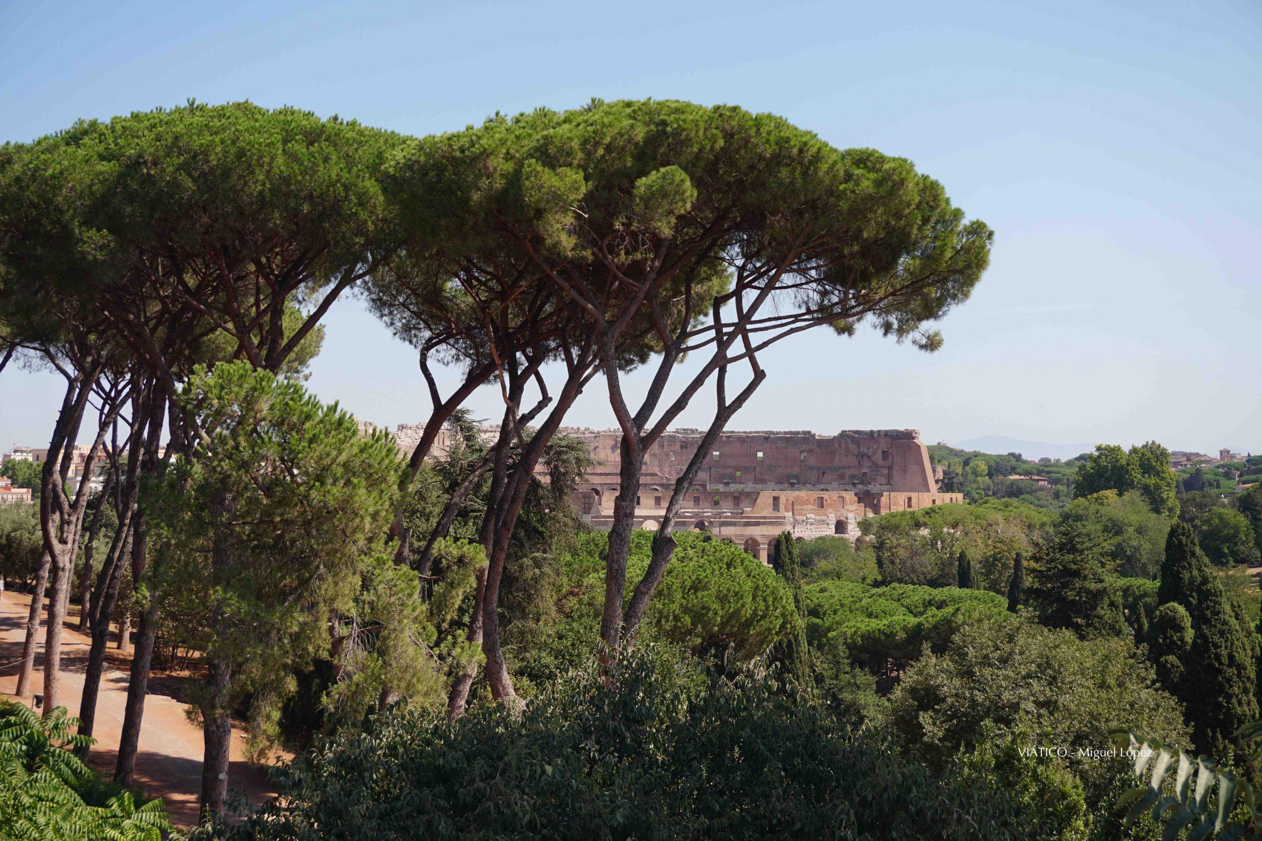 Coliseo desde el Palatino